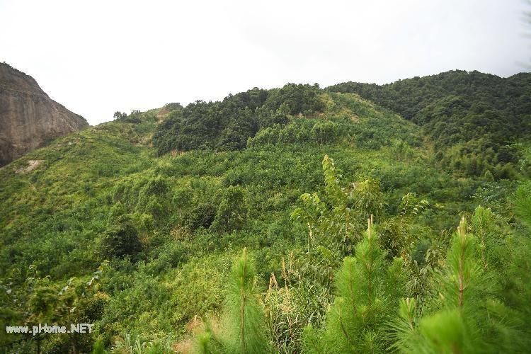 8年花了10多亿,广东大宝山生态修复遇新难题 | 电讯特稿