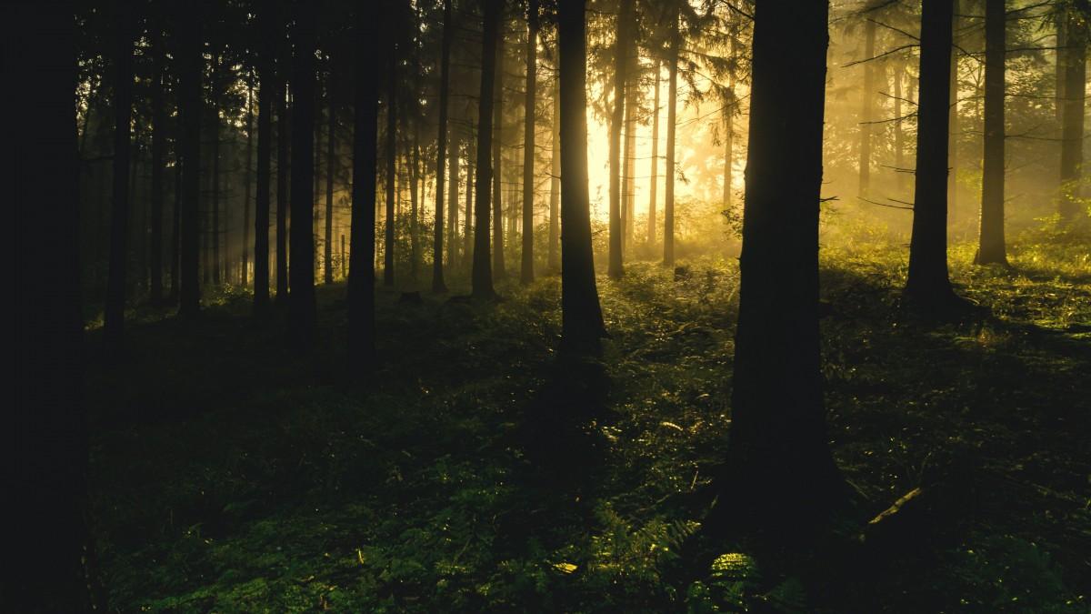 森林冷杉图片大全